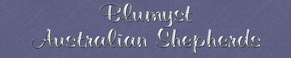 Blumyst Australian Shepherds